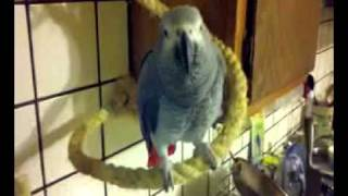 Angry parrot thinks I pooped on him