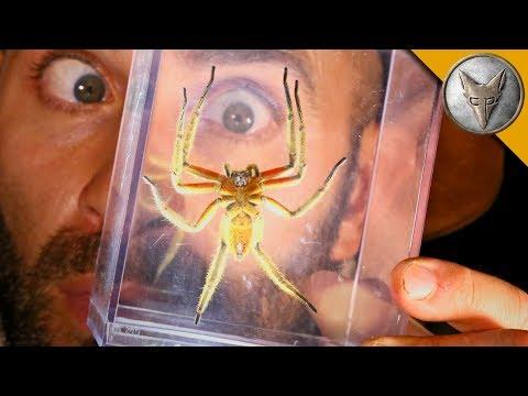 DANGEROUS Jungle Spider