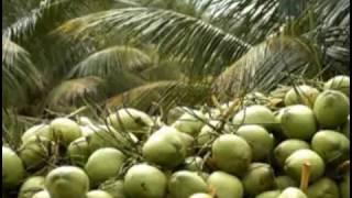 Banglar Krishi Episode no 269 (Dwarf Coconut Cultivation DGDAE+ Poultry Farm Arun Barun