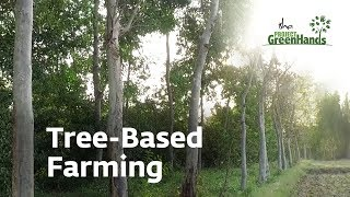 Agro Forestry | Tree-Based Farming | Trees for Life | Project GreenHands