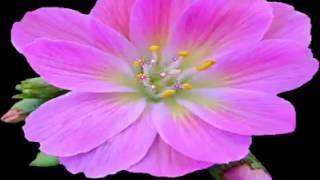 video 1424010224 mp4 jessica