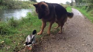 Why I Love Ducks