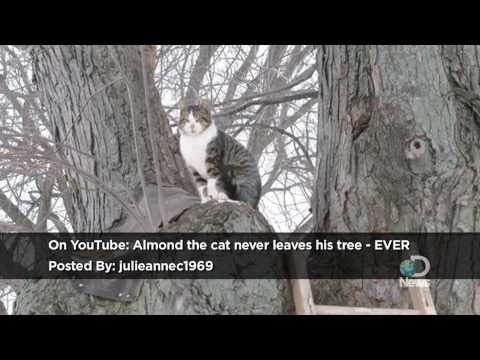 Xxx Mp4 Almond The Cat Never Leaves His Tree Ever Explained 3gp Sex