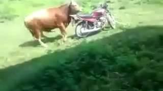 مواقف وطرائف الحيوانات