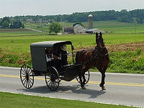 Xxx Mp4 Amish Child Sex Sting In Horse Drawn Buggy 3gp Sex