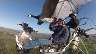 Migrando com os pássaros - science