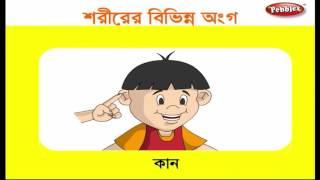 Preschool Learning Videos in Bengali | Kids Educational videos