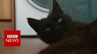 Missing cat found after 15 years - BBC News