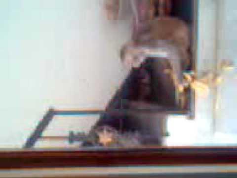 Xxx Mp4 Funny Indian Desi Monkey In Tyagi House 3gp 3gp Sex