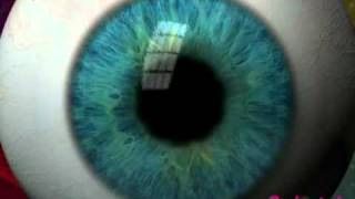 The structure of the human eye (part 1)