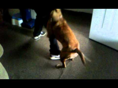 Xxx Mp4 My Dog Trying To Fuck My Brother 3gp Sex