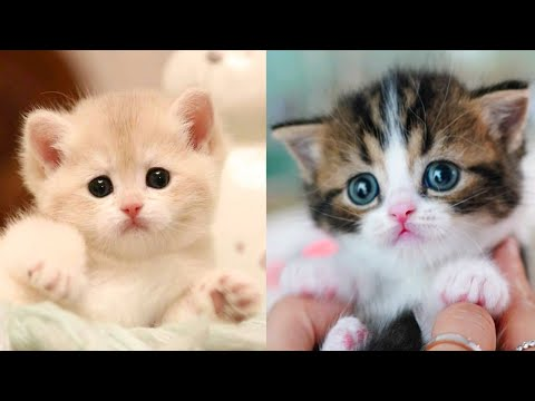 Baby Cats Cute and Funny Cat Videos Compilation 27 Aww Animals