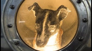 The Sad, Sad Story of Laika, the Space Dog
