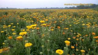 Manikgonj Tour (এক বিকেলে মানিকগঞ্জের সিংগাইর এ)