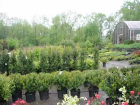XXX See This Video Report of Nursery Stock  we Grow In Eastern Pa