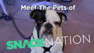 Meet the Pets of SnackNation!