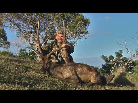 Hunting Rusa deer in New Caledonia part 22