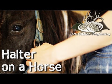 How to put a halter on a horse - horse care and tips Episode #1