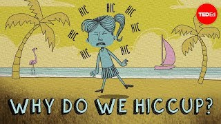 Why do we hiccup? - John Cameron