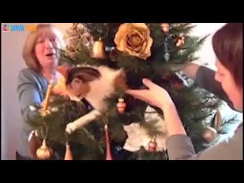 Gatos haciendo travesuras con árboles de Navidad
