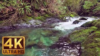 3 HRS Virtual Nature Walk in the Rain Forest in 4K with Relaxing Piano Music - Quinault Loop Trail