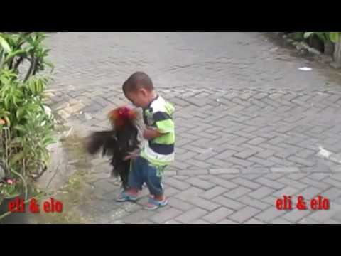 funny videos the kid will make you laugh so hard when the rooster kick him