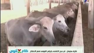 رئيس قطاع الثروة الحيوانية : طرح 5 آلاف رأس ماشية استعدادا لعيد الأضحى  بأسعار مخفضة