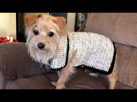 Xxx Mp4 ☾ Hazel S Crochet Fall Vest HD Uni Sex Dog Cat Holiday Crochet Vest Tutorial ☽ 3gp Sex