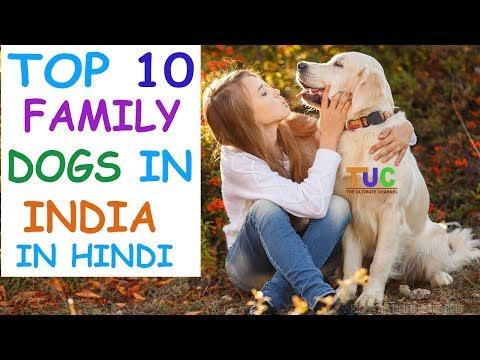 Xxx Mp4 Top 10 Family Dogs In India In Hindi Dog Facts Popular Dogs The Ultimate Channel 3gp Sex