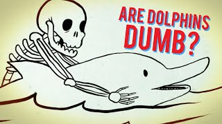 Why Dolphins Might Actually Be Dumb