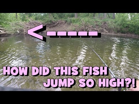 Xxx Mp4 That Fish JUMPED PRETTY HIGH Hunting For The Waterfall Fish Again PART 2 3gp Sex