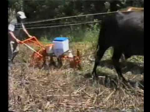 Plantadeira Tração Animal Knapik Trabalhando