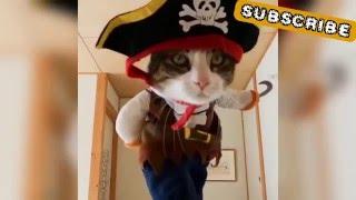 Pirate Cat 2016 | Viral funny Video
