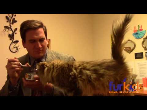 Official Furkids Kitty Kommercial