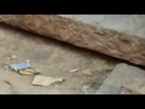 Xxx Mp4 Jodhpur Kali Berry Main Naag Nagin Sex 3gp Sex