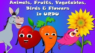 Animals, Birds, Fruits, Vegetables and Flowers in URDU | Urdu Learning For Kids | Rhymes Collection