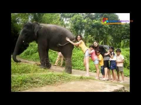 Actress Nazriya and Ranjini in Trouble-Elephant Ride