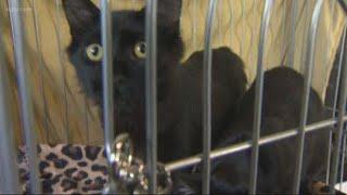 Kitten stolen from Pixie Project
