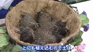 ハンギングバスケットの寄せ植え【コメリHowtoなび】