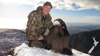 Tahr Hunting NZ