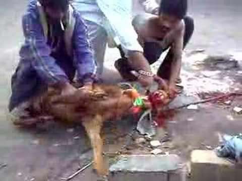 Karachi Goat Slaughter