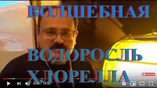 Волшебная Водоросль Хлорелла и Здоровье: На Хакатоне 2018 в Киеве