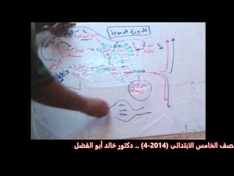 Xxx Mp4 الدورة الدموية للصف الخامس الابتدائى 4 2014 دكتور خالد عبد الفتاح أبو الفضل 3gp Sex