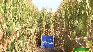 Bunge: Manejo y resultados de la fertilización de soja y maíz. (#619 2015-06-13)