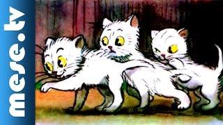 Vlagyimir Szutyejev: A három kiscica (mesefilm, animáció)
