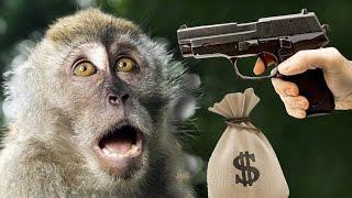 MONKEY MURDER - 1 Dollar 1 Hour Gameplay