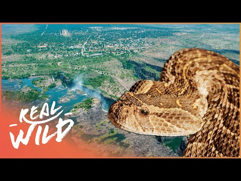Tswapong Botswana s Wild Kingdoms Real Wild Documentary