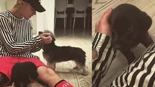 Justin Bieber Adds A New Puppy To His Family!