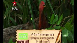 Survivor India Factoid - Survivor India Uncut