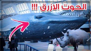 البحث عن الحوت الازرق | شوفو ايش لقينا في لندن ؟!!!
